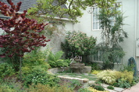Small entry garden tracy westphal landscape architect for Nautilus garden designs